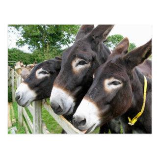 J'aime des ânes ! carte postale