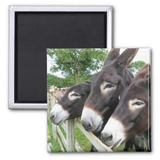 J'aime des ânes ! magnet carré