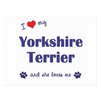 J'aime mon Yorkshire Terrier (le chien femelle) Carte Postale
