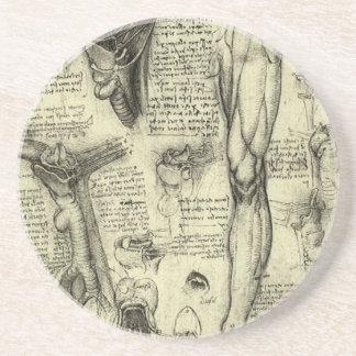 Jambe humaine vintage Leonardo da Vinci de larynx Dessous De Verres