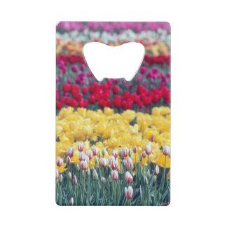 Jardin d'affichage de tulipe dans la vallée de