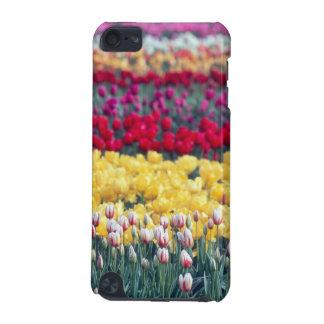 Jardin d'affichage de tulipe dans la vallée de Ska Coque iPod Touch 5G