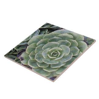 Jardin de cactus grand carreau carré