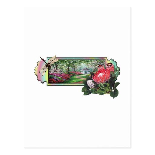 Jardin de libellule cartes postales