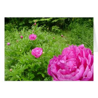Jardin rose de pivoine carte de vœux