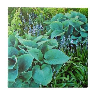 Jardin vert luxuriant de plante de hosta et de fou petit carreau carré