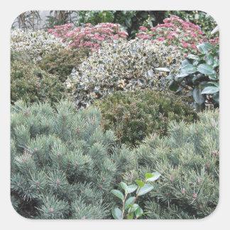 Jardinerie avec la sélection des plantes de sticker carré