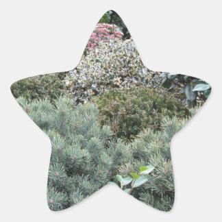 Jardinerie avec la sélection des plantes de sticker étoile