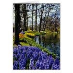 Jardins de Keukenhof, Lisse, fleurs néerlandaises Carte De Vœux