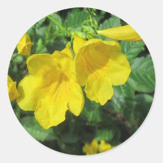 Jaune de fleur de jardin de trompette autocollant rond