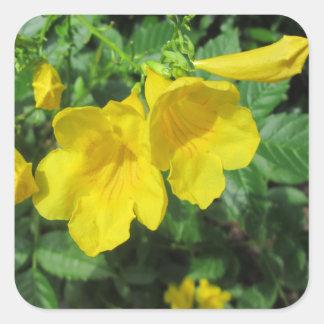 Jaune de fleur de jardin de trompette stickers carrés