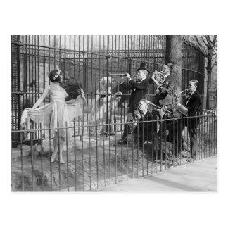 Jazz-band amusant les ours blancs, 1925 carte postale