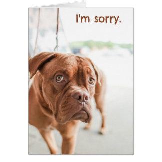Je suis carte désolée d'excuses avec le chien