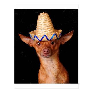 Je suis un chien, pas un Mexicain ! Cartes Postales