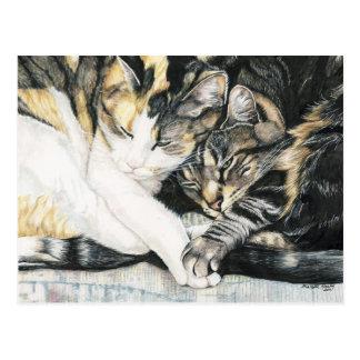 Je veux carte postale d art de chat tenir votre p