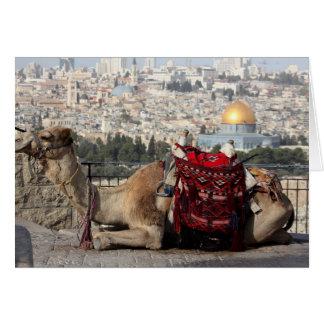 Jérusalem, monde des colos, un chameau cartes