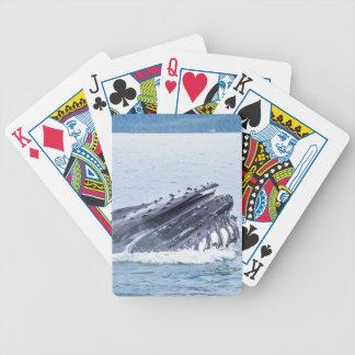 Jeu De Cartes baleine de bosse