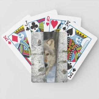 Jeu De Cartes cartes de jeu avec la PIC du loup gris dans des