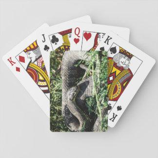 Jeu De Cartes Cartes de jeu de serpent