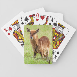 Jeu De Cartes De Getty jeune Brown antilope Waterbuck des images