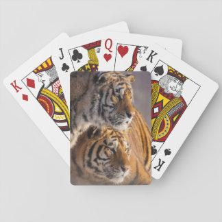 Jeu De Cartes Deux tigres sibériens ensemble, la Chine