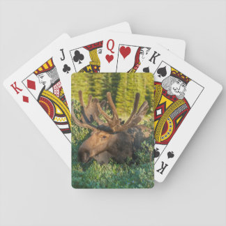 Jeu De Cartes Orignaux de Taureau en velours, le Colorado