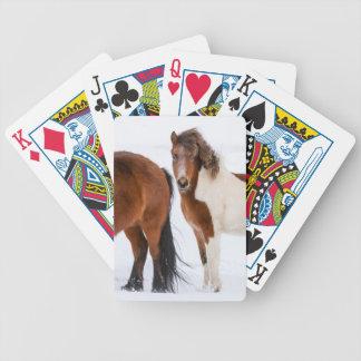 Jeu De Cartes Pinto a coloré le cheval islandais