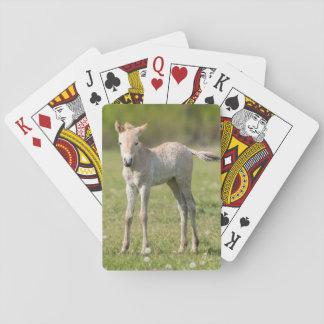 Jeu De Cartes Poulain du cheval de Przewalski, Hongrie