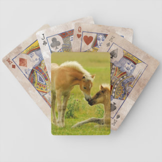 Jeu De Cartes Poulains de cheval