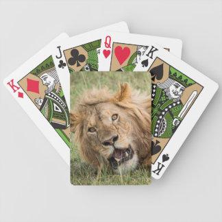 Jeu De Cartes Repos masculin de lion