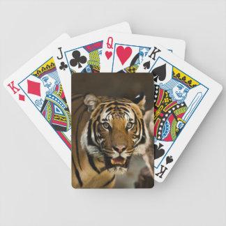 Jeu De Cartes Tigre sibérien