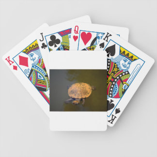 JEU DE CARTES TORTUE QUEENSLAND AUSTRALIE RURALE