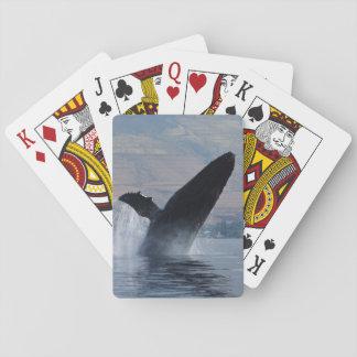 Jeu De Cartes violation de baleine de bosse