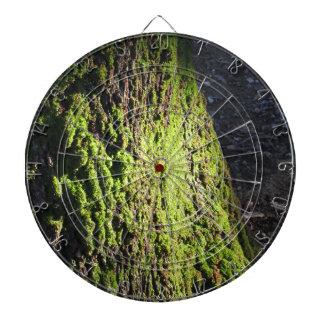 Jeu De Fléchettes La mousse verte dans le détail de nature de la