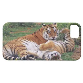 Jeu de tigres de Bengale Coques iPhone 5 Case-Mate