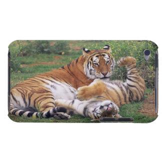 Jeu de tigres de Bengale Coques iPod Case-Mate