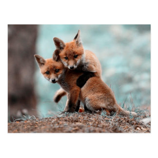 Jeu des kits de Fox rouge Cartes Postales