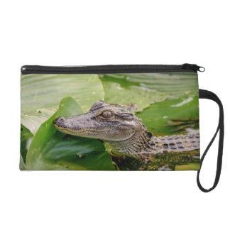 Jeune alligator dragonne