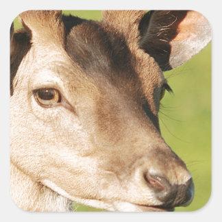 Jeune animal sauvage futé de Daniel Sticker Carré