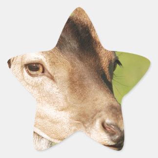 Jeune animal sauvage futé de Daniel Sticker Étoile