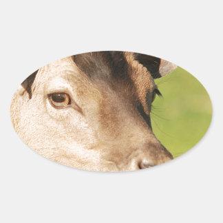 Jeune animal sauvage futé de Daniel Sticker Ovale