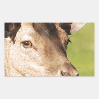 Jeune animal sauvage futé de Daniel Sticker Rectangulaire