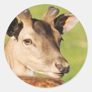 Jeune animal sauvage futé de Daniel Sticker Rond