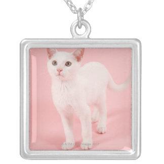 Jeune chat blanc 2 collier