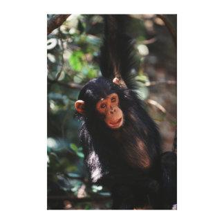 Jeune chimpanzé accrochant à la forêt toiles
