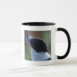 jeune chiot border collie mug