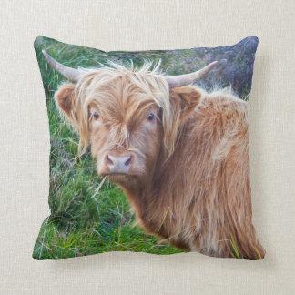 Jeune coussin des montagnes de vache