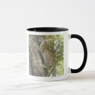 Jeune escalade masculine de léopard (Panthera Mug