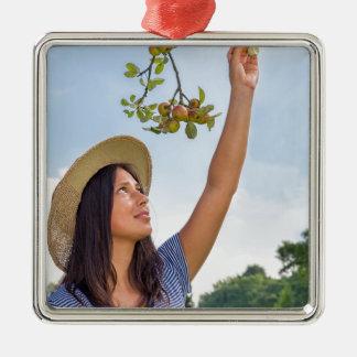 Jeune femme sélectionnant les pommes rouges du ornement carré argenté