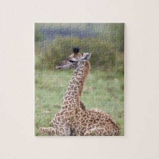 Jeune girafe de masai (camelopardalis de Giraffa Puzzle